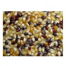 Grains Multi Colored PopCorn (1x25LB )