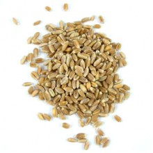 Grains Wheatberries (1x50LB )