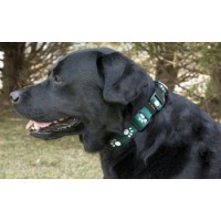 Iconic Pet Paw Print Adjustable Collar - Green - Medium