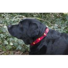 Iconic Pet Paw Print Adjustable Collar - Red - Large